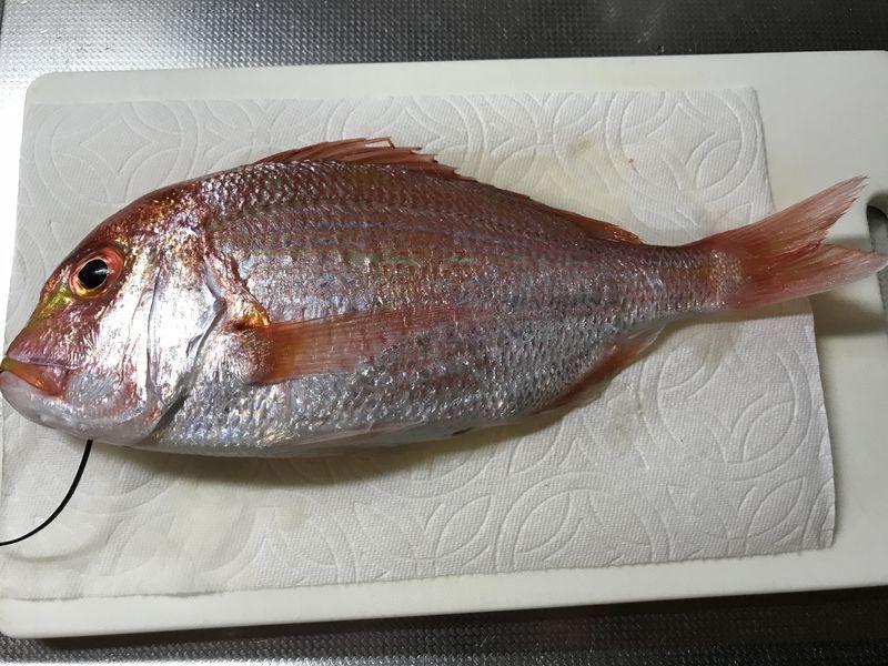 レンコ鯛2