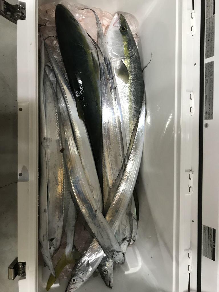 釣り始め釣果