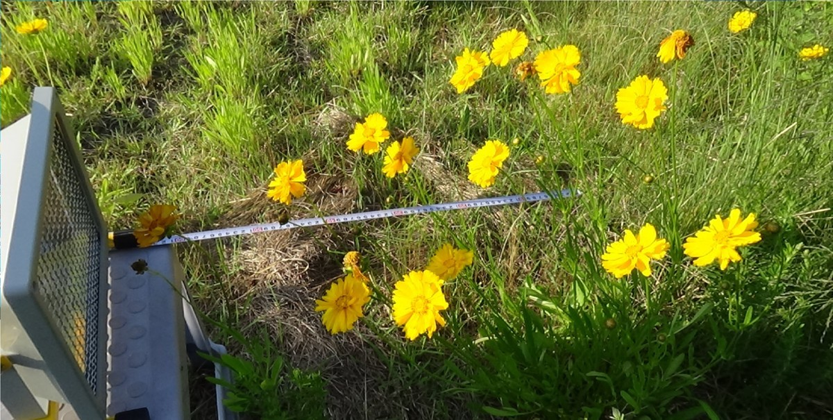 f:id:UV-Flower:20200702170149j:plain