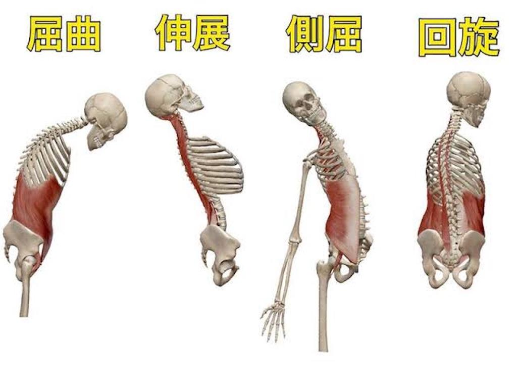 f:id:UedaYogaHiroki:20200222171509j:image
