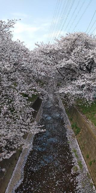 f:id:Umino-Utako:20210401170339j:plain