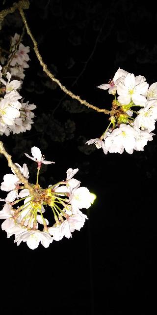 f:id:Umino-Utako:20210401170619j:plain