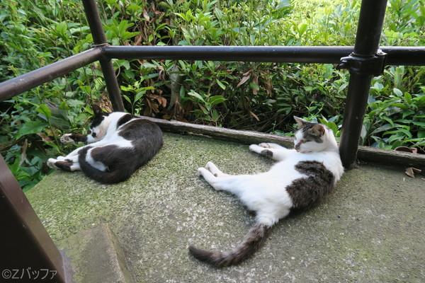 鋸山ロープウェー山頂駅の猫達