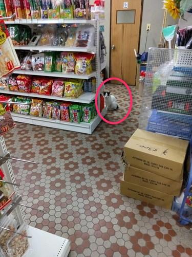 青ヶ島、十一屋酒店の猫