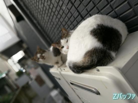 honor8のワイドアパチャーで撮影したボケ味のある猫写真
