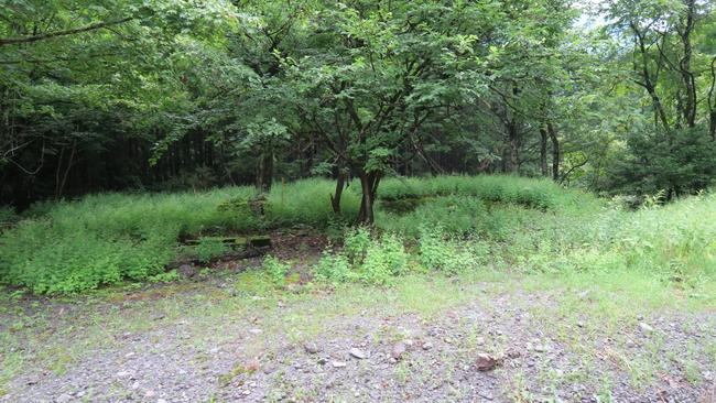 尾盛駅周辺の林