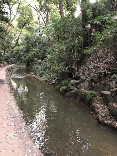 等々力渓谷の遊歩道