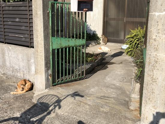 男木島の猫達