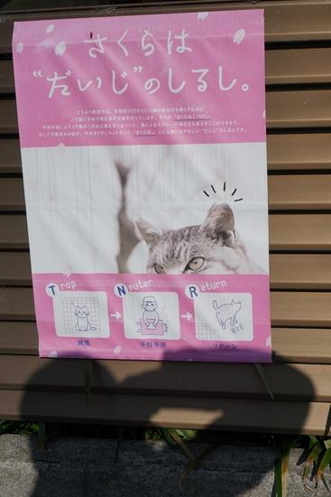猫の避妊手術に関するポスター