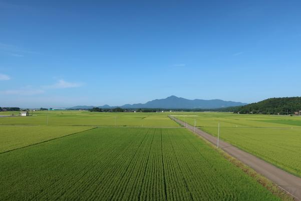 くびき駅から見える畑の景色