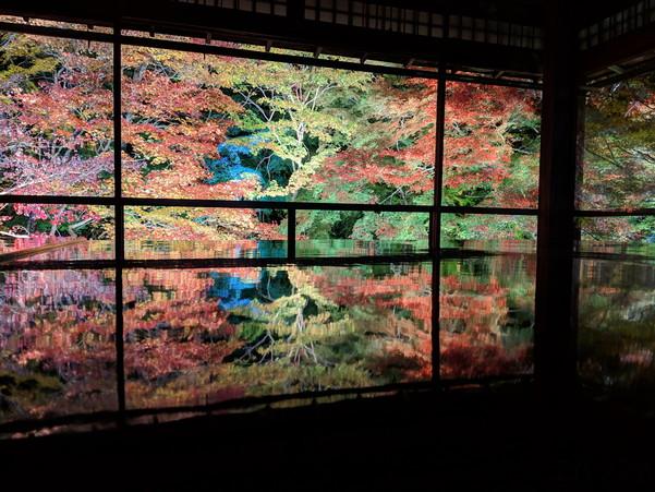 瑠璃光院の紅葉ライトアップ