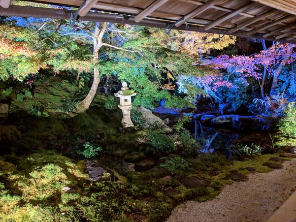 ライトアップされた瑠璃光院の庭園
