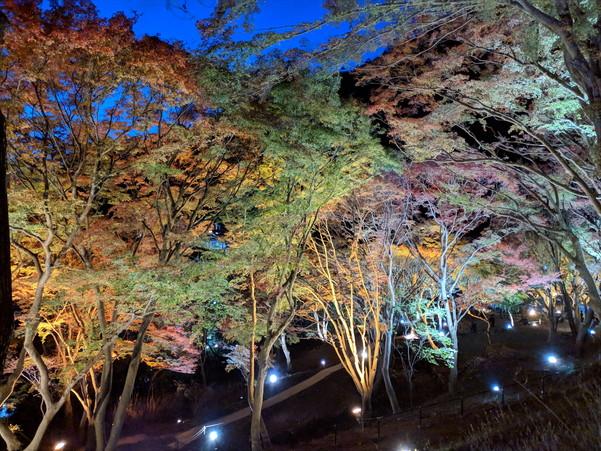 紅葉の季節にライトアップされる八瀬もみじの小径