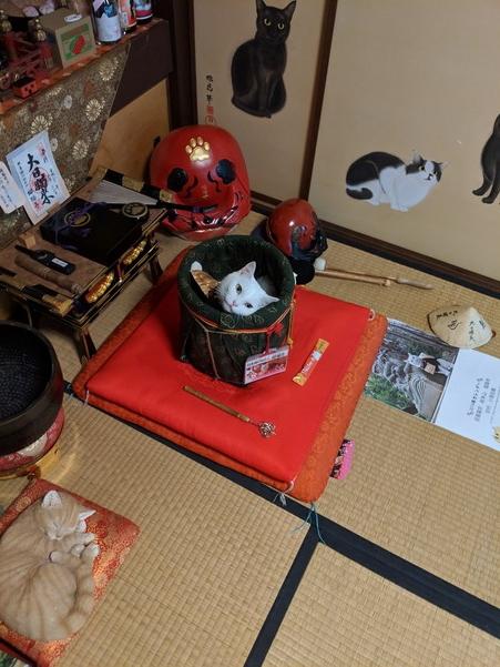 まったりする猫猫寺の小雪住職