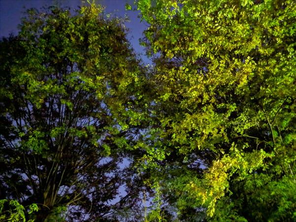 Pixel 3の夜景モードで撮影すると樹木の葉っぱがちゃんと描写されている