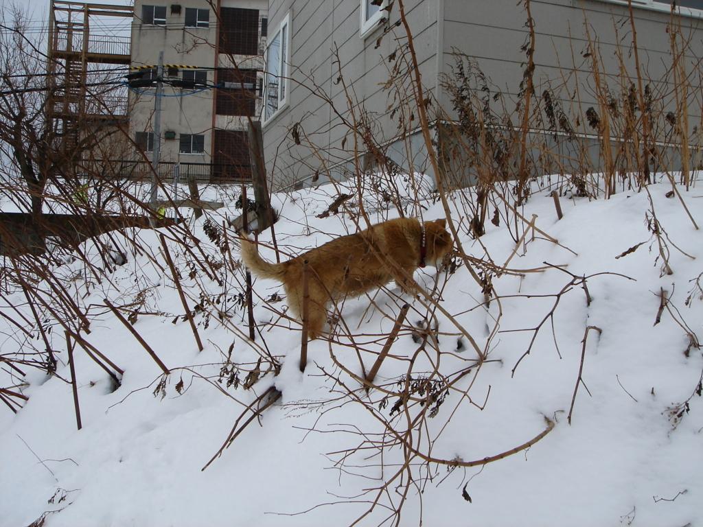f:id:UrushiUshiru:20170807120444j:plain