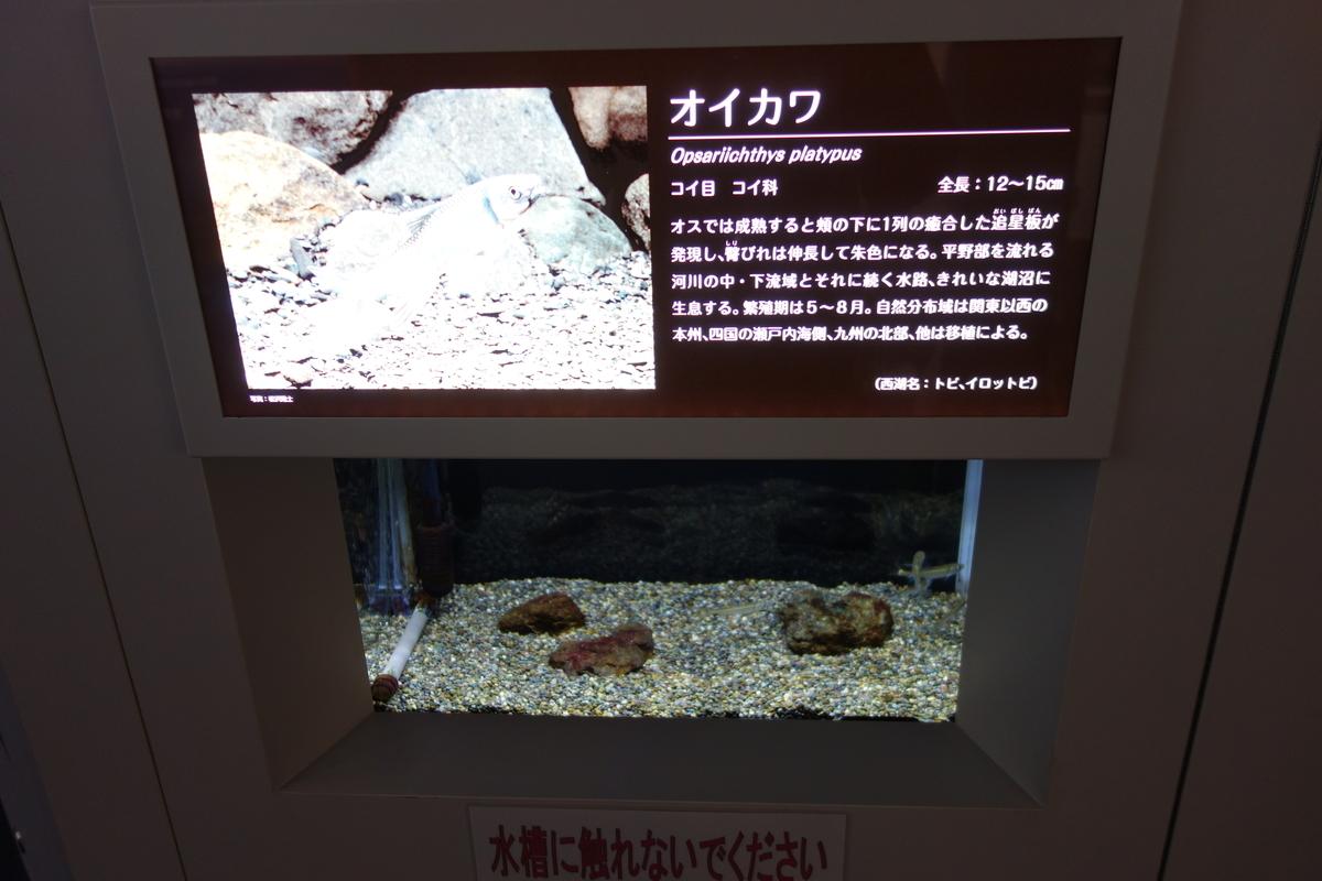 f:id:UrushiUshiru:20190516165116j:plain