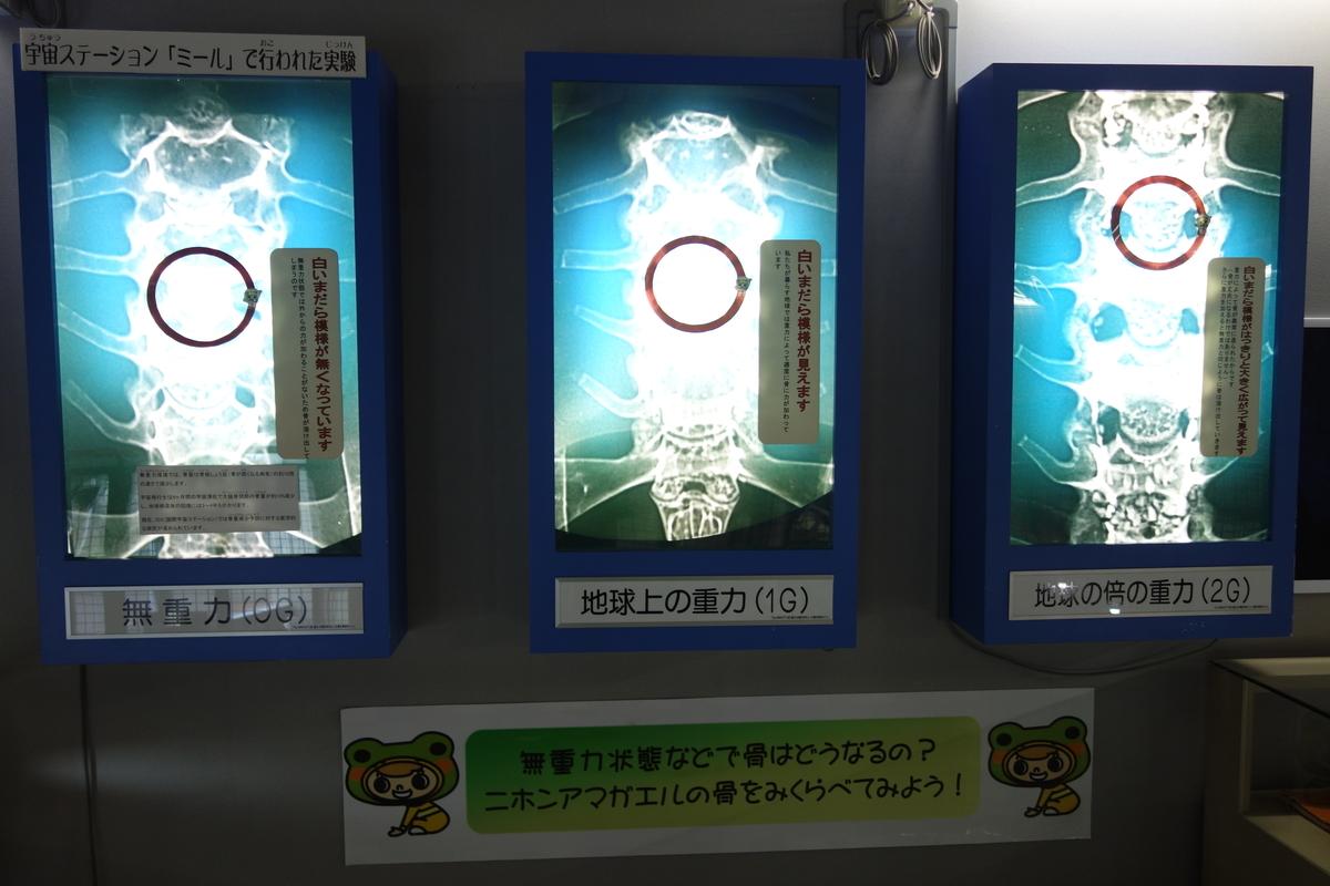 f:id:UrushiUshiru:20201207020544j:plain