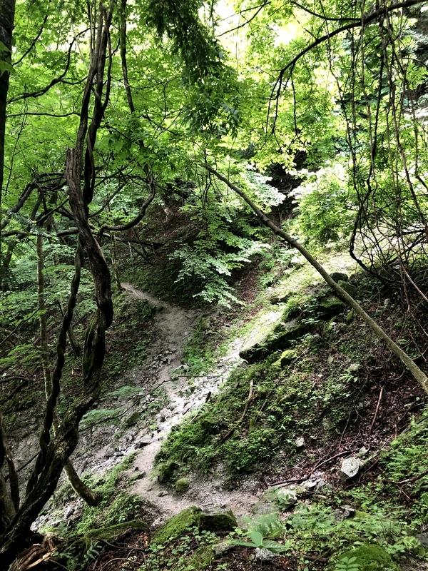精進ヶ滝 登山道