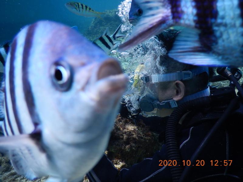 沖縄のダイビング
