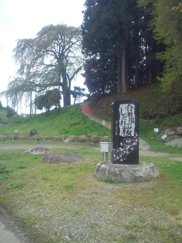 とある桜の記念石碑(モニュメント)