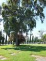 親類の墓地