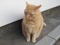 江ノ島のネコ様(1)