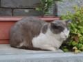 江ノ島のネコ様(2)