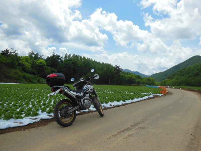 川上村のキャベツ畑(1)
