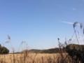 金谷元名林道からのワンショット。林道脇にススキが広がる