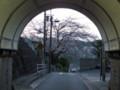 本日の坂本トンネルふうにょん桜 #tamayura