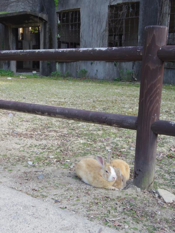 奥は発電所跡。無論ウサギ様はそんなこと気にもせずw