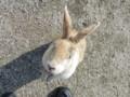 ジャンピングウサギ