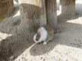 子ウサギ!