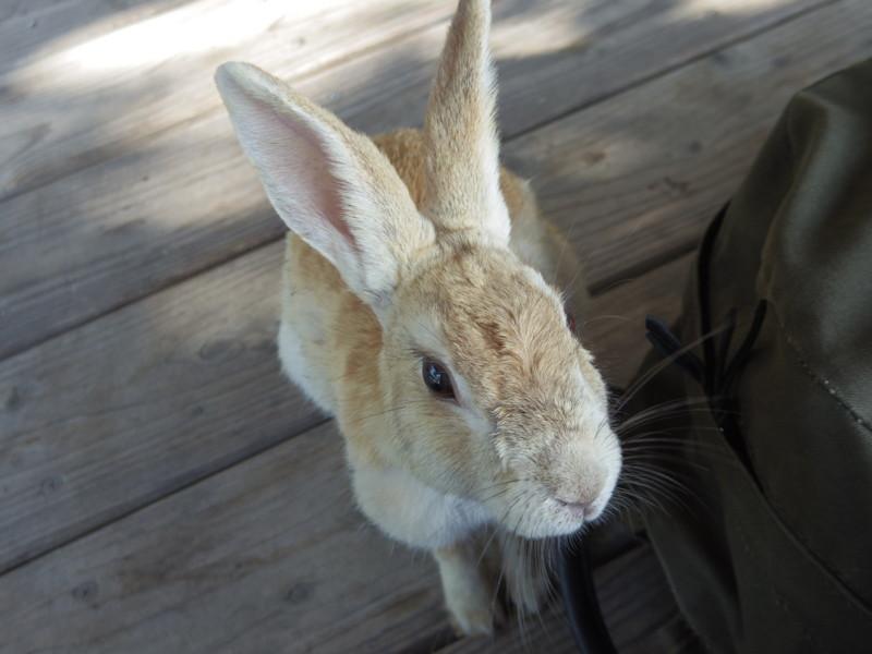 這い寄るウサギ