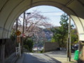 本日の坂本トンネル(+愛車ちらっと) #tamayura