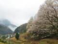 宿根の大桜から市街方面