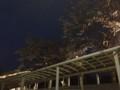おまけ: 上河内SAの夜桜