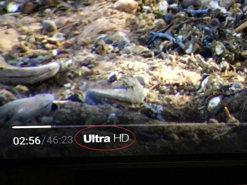 fire tv 4K 視聴