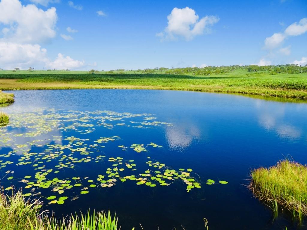 f:id:Wetland:20180822221742j:plain