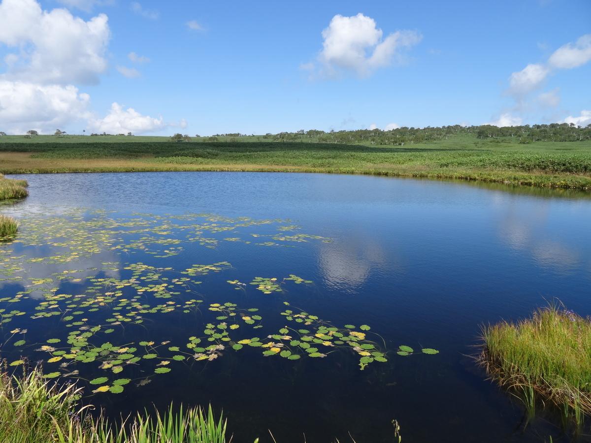 f:id:Wetland:20190522180724j:plain