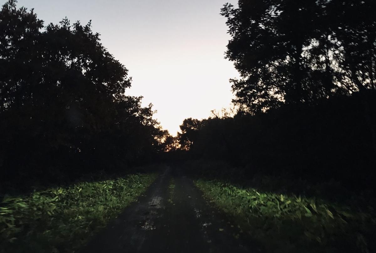 f:id:Wetland:20191021000814j:plain