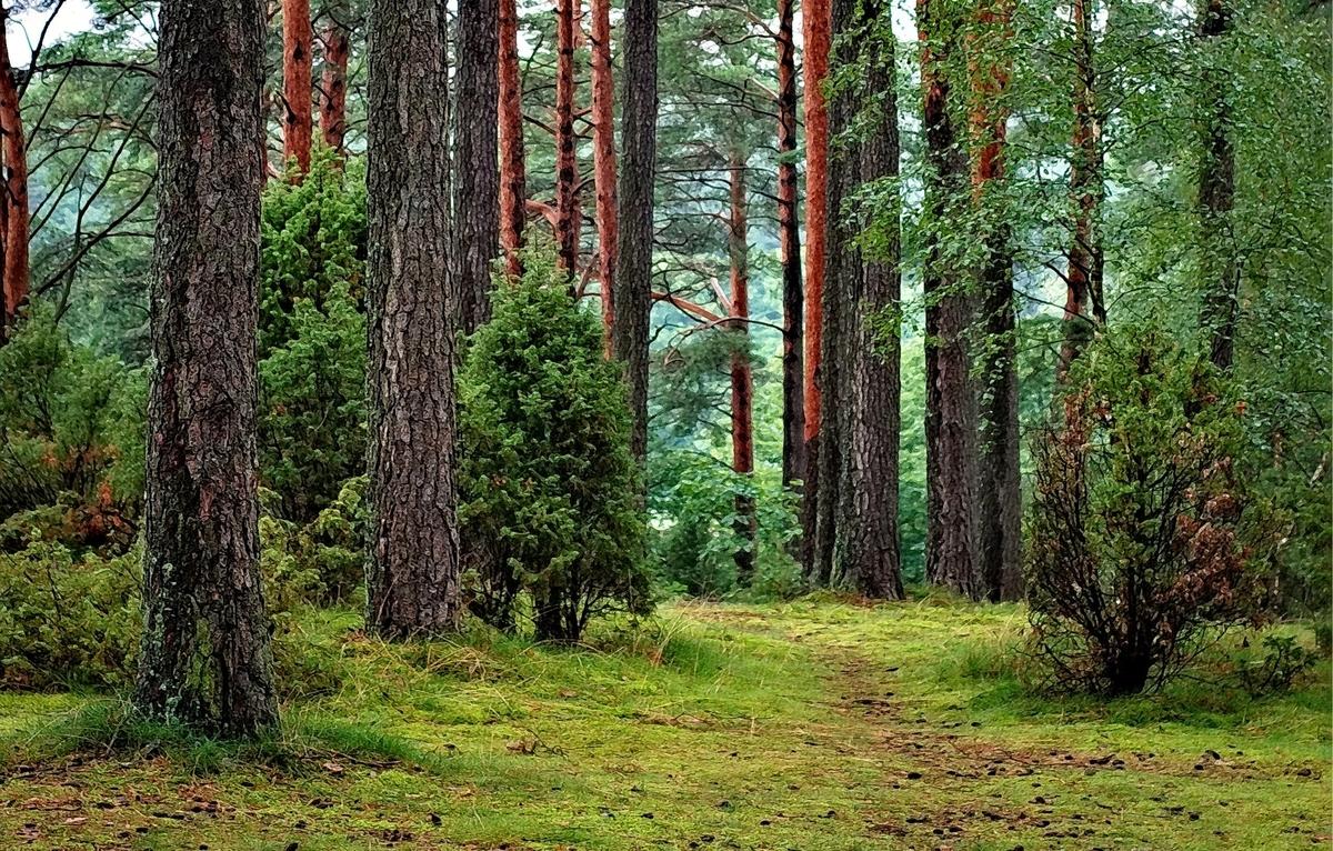 f:id:Wetland:20200301003129j:plain