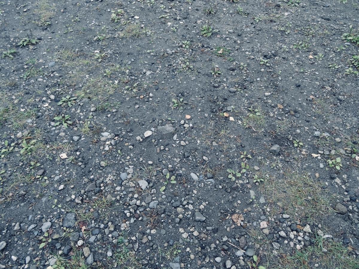 f:id:Wetland:20200413012450j:plain