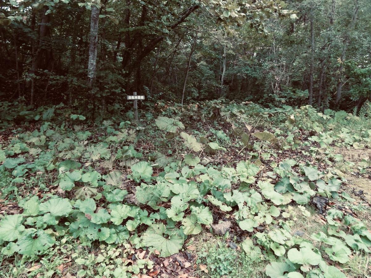 f:id:Wetland:20200413012827j:plain