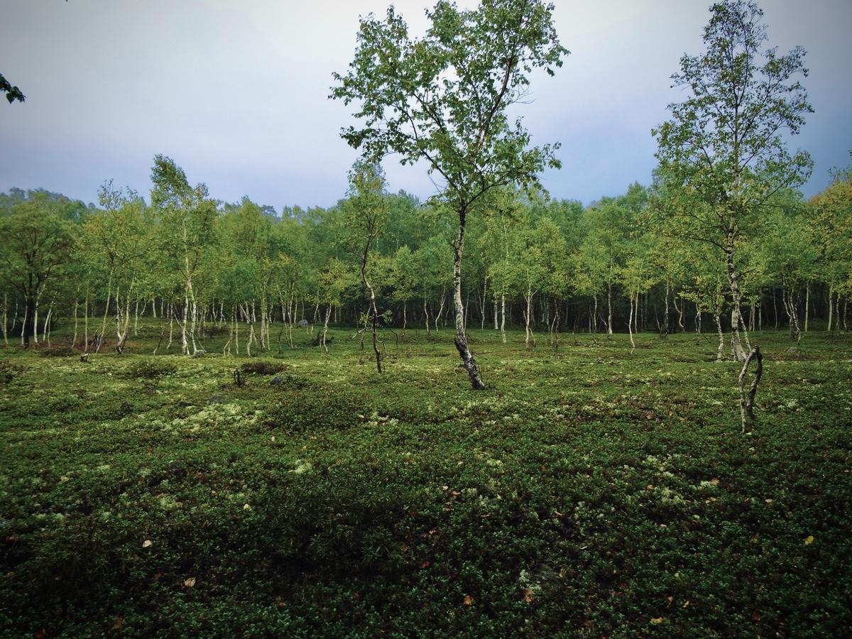 f:id:Wetland:20200413225336j:plain
