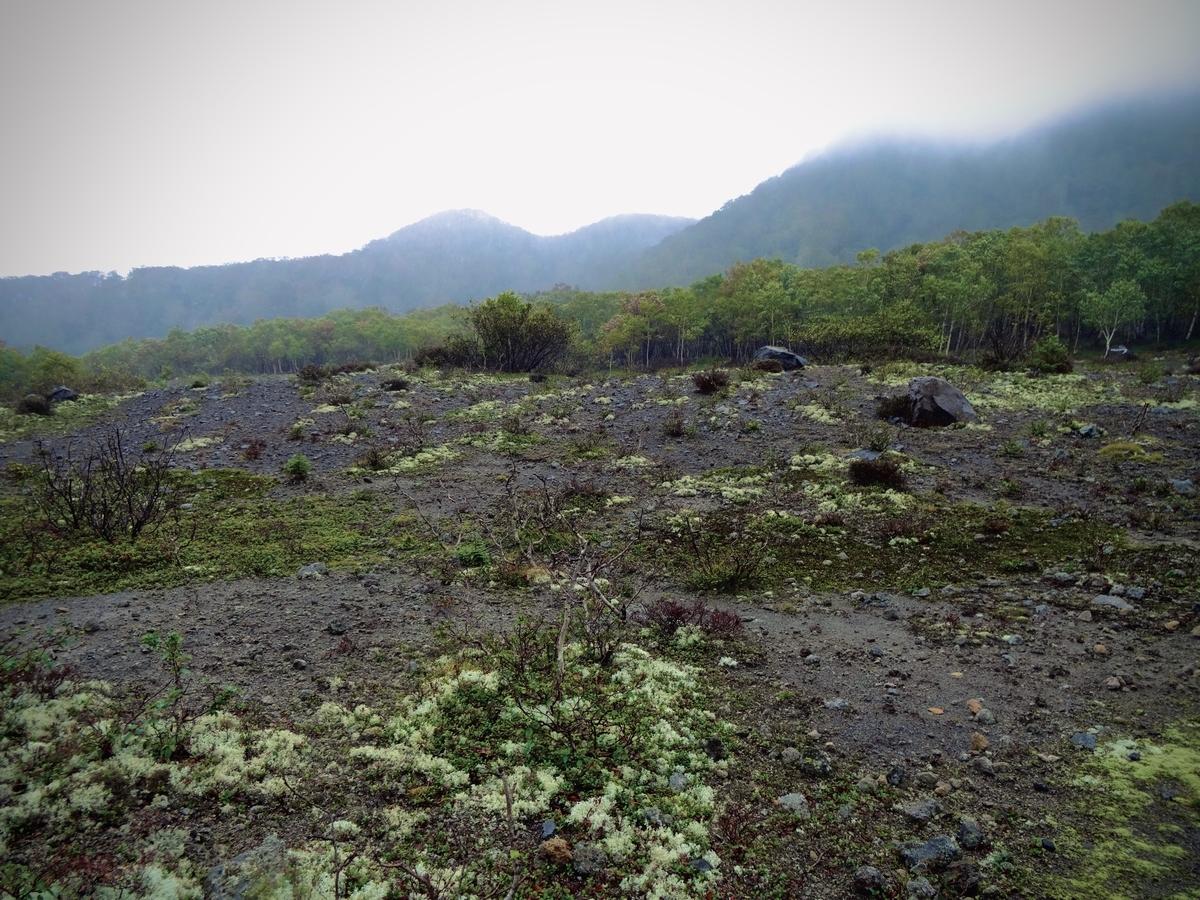 f:id:Wetland:20200413225341j:plain