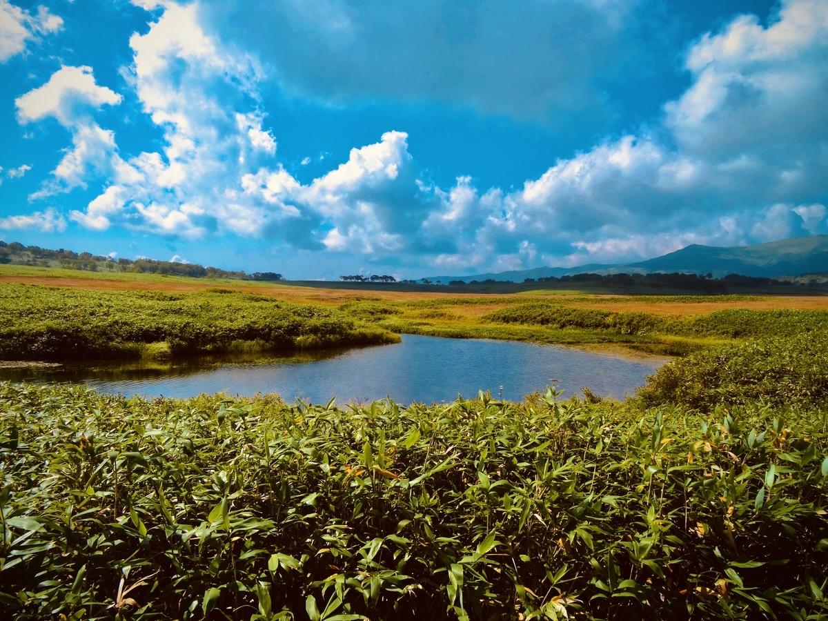 f:id:Wetland:20200416020202j:plain