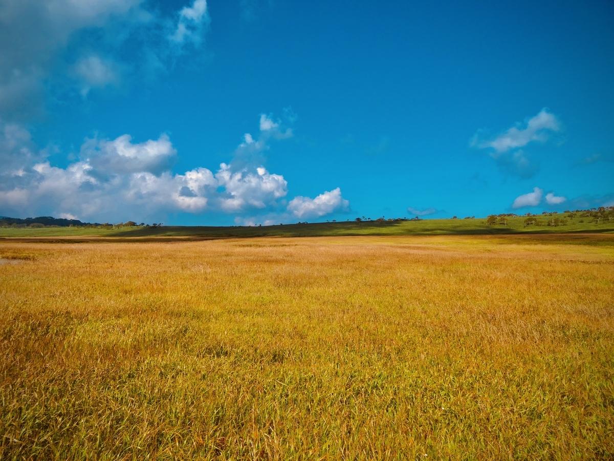 f:id:Wetland:20200416020518j:plain