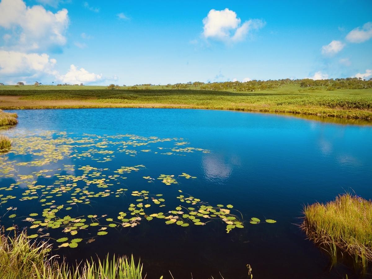 f:id:Wetland:20200416021039j:plain